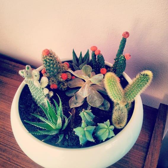 07_Cactussen