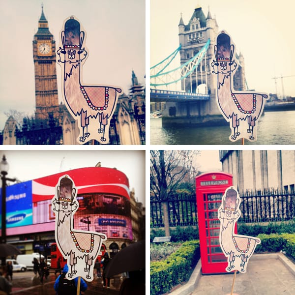 London llama invasion