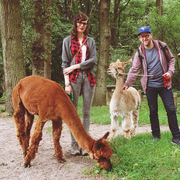 AlpacaWandeling_1