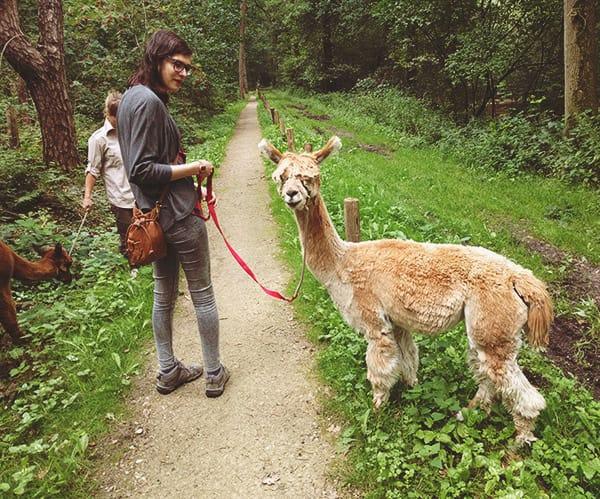 AlpacaWandeling_2